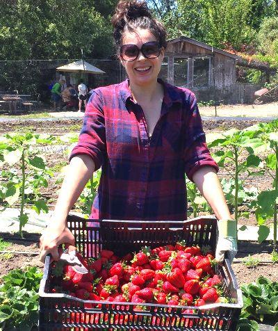A volunteer with freshly harvested strawberries.