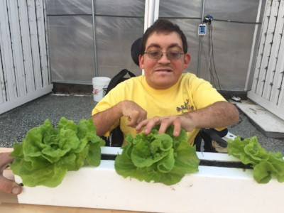 Noah works on hydroponic lettuce in his wheelchair.