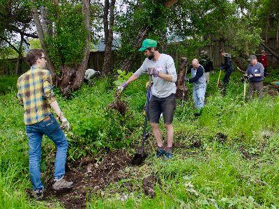 Volunteers remove invasive plants form the riparian zone.