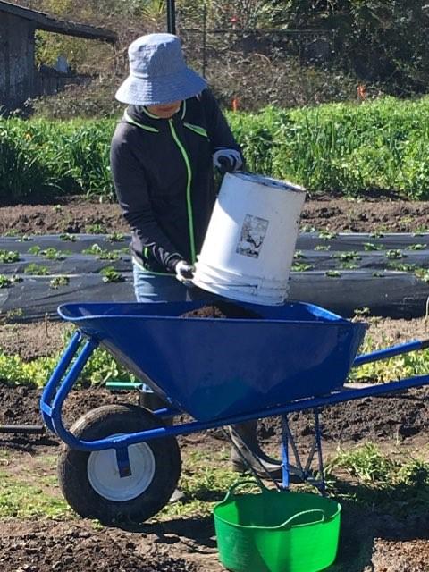 A volunteer works in the garden.