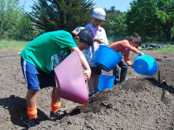 Children working together to spread compost on planting rows.