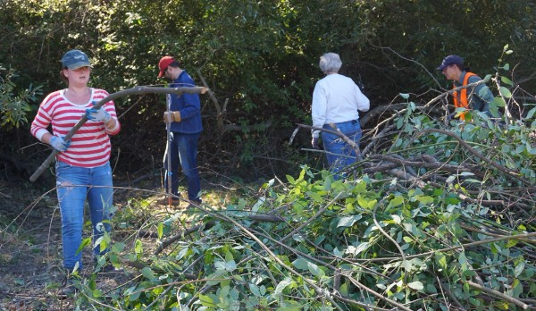 Volunteers work together to clear brush and restore habitat along Pogonip Creek.