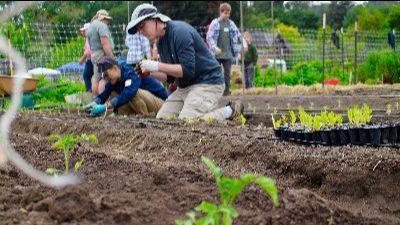 Volunteers work together to plant spring crops.