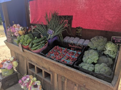 The farm stand with flowers, vegetables, strawberries, and eggs.