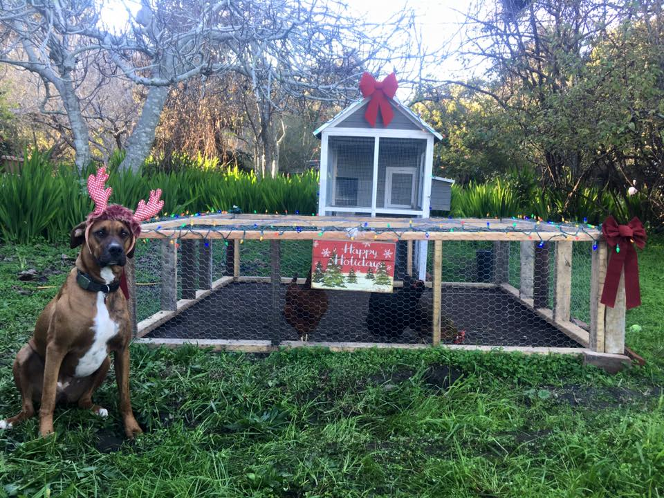 Summer the farm dog with antlers sitting next to the decorated chicken coop.