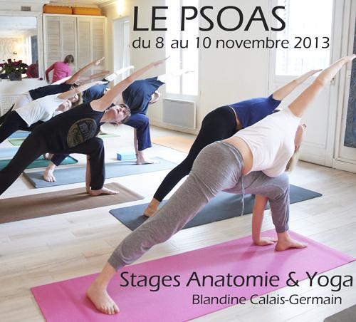 Le Psoas - stages anatomie pour le yoga par Blandine Calais Germain au studio Trini Yoga Paris