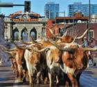 Denver Metro Happenings -  Ken Malo Real Estate