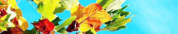 Herbstfarben in der Natur