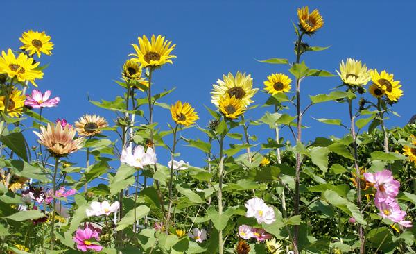 Blumen aus unserem Garten.