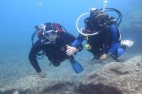 Assistant Diver DDI