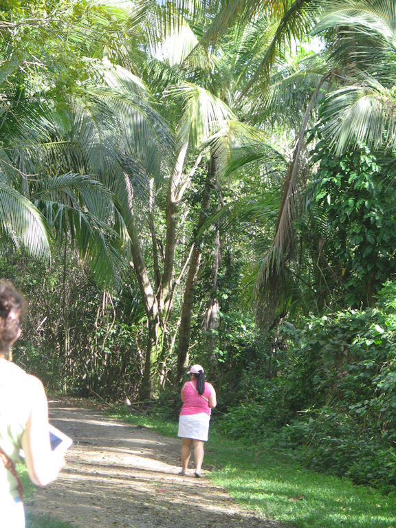 Photo: Exploring the palm ferns in Puerto Rico, with Gale using her iPad to capture photos.