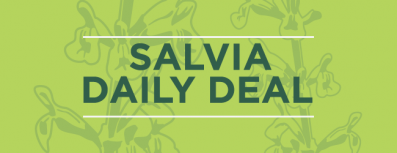 Salvia Daily Deal