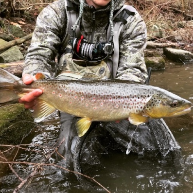 Big brown trout little Juniata Pennsylvania