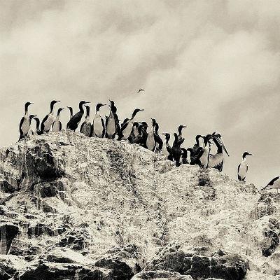 Monterey gold by Nadia Attura