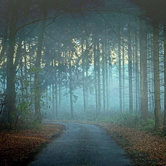 Walk in the Morning Fog
