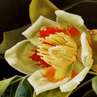 'Liriodendron Tulipifera'