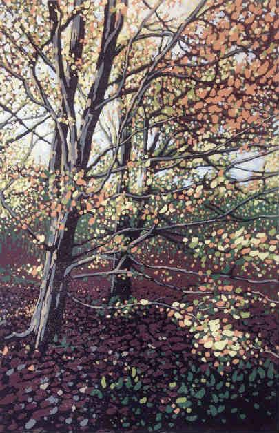 Autumn Beeches by Alexandra Buckle