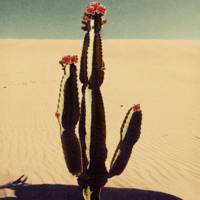 Cactus bloom by Nadia Attura