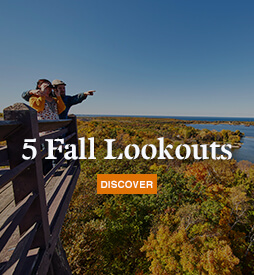 5 Fall Lookouts