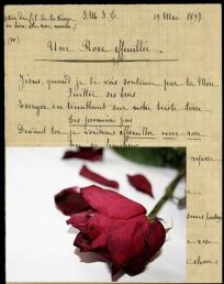 Une rose effeuillée