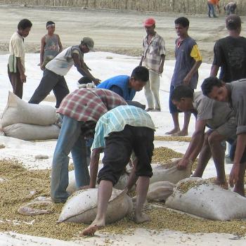 East Timor Coffee Drying