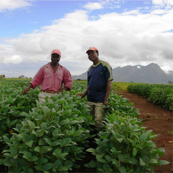 Soybeans Farmers in Mozambique