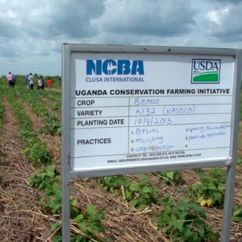 Ugandan Conservation Farming