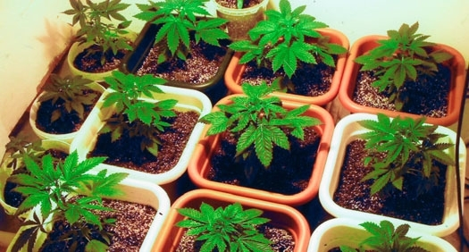 Baker Institute Update: Should the war on the drugs go up in smoke?