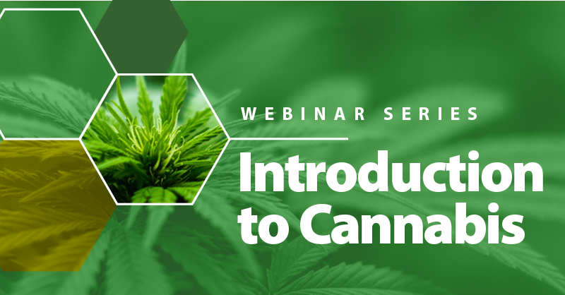 Cannabis in background and text reading Webinar Series, Introduction to Cannabis