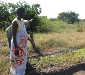 Sudanese farmers inspect their crops.