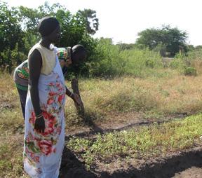 Sudanese farmers inspect their crops.