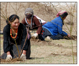 Anti-desertification efforts bring hope to Tibetan communities