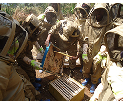 Adolescent boys and girls in Rwanda learn how to care for bee hives and harvest honey.