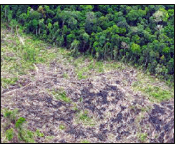 Deforestation in the Tesso Nilo National Park, Indonesia, May 2013