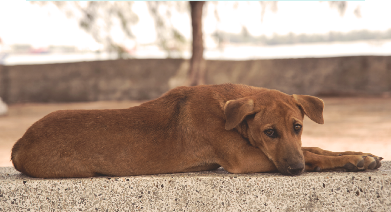 The latest and greatest research impacting homeless dogs and cats