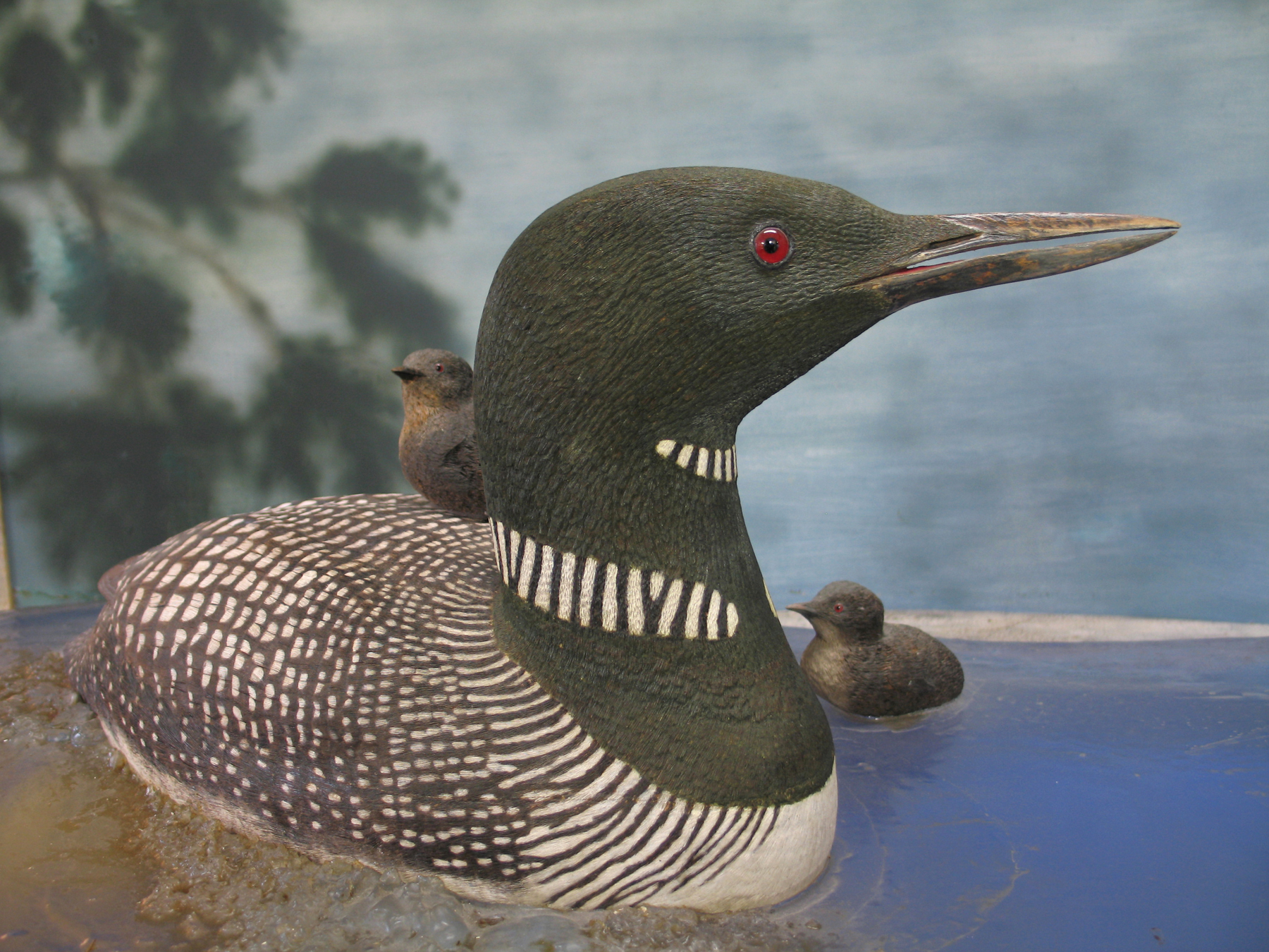 Loon mother and chicks, carved by Bob Spear