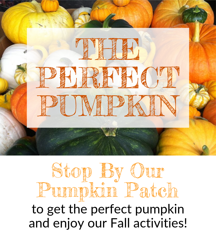 October Email - Find the Perfect Pumpkin ? 2