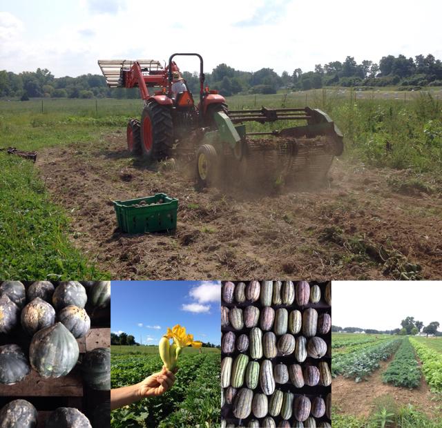 Lineage Farm CSA Newsletter September 5th