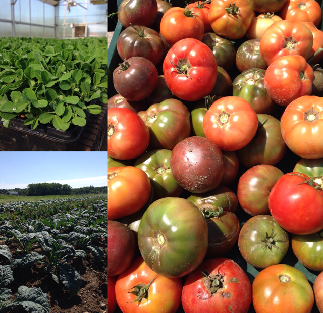Lineage Farm CSA News August 11th