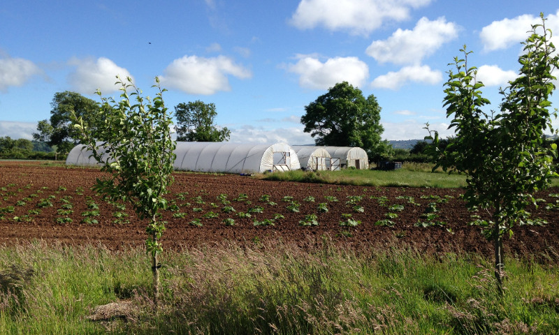 Fields and polytunnels at The Community Farm