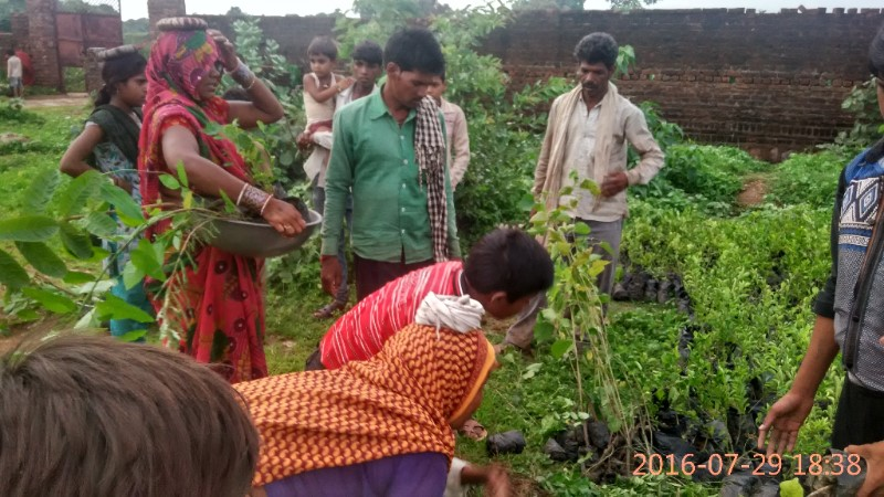 4000 fruit trees for 120 marginal farmers in Lalitpur, Bundelkhand, Uttar Pradesh, India.