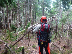 Trail Maintainer cutting trees
