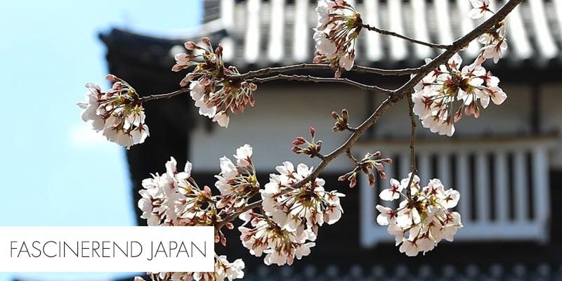 Fascinerend Japan