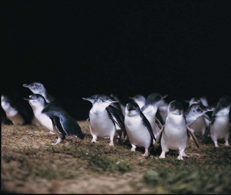 ペンギンパレ―ド