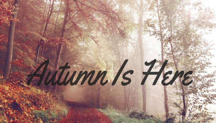 Autumn CBT Dublin Newsletter