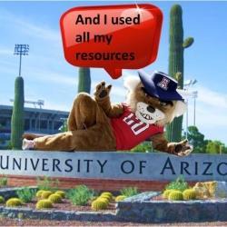 Wilbur laying on the University or Arizona banner