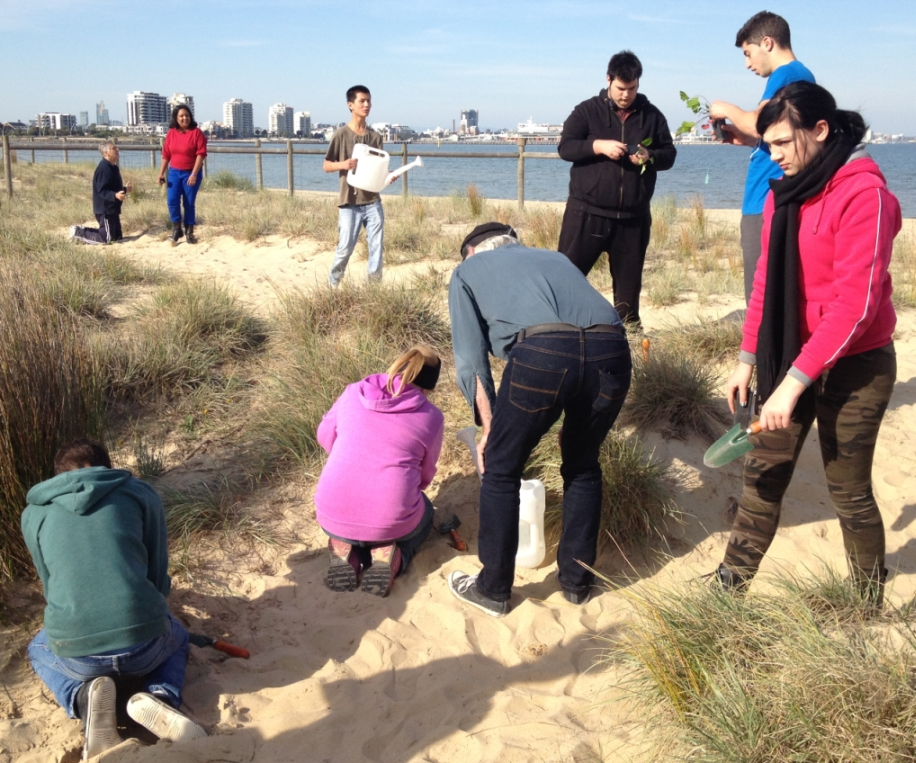 Dune Planting at Perc White.