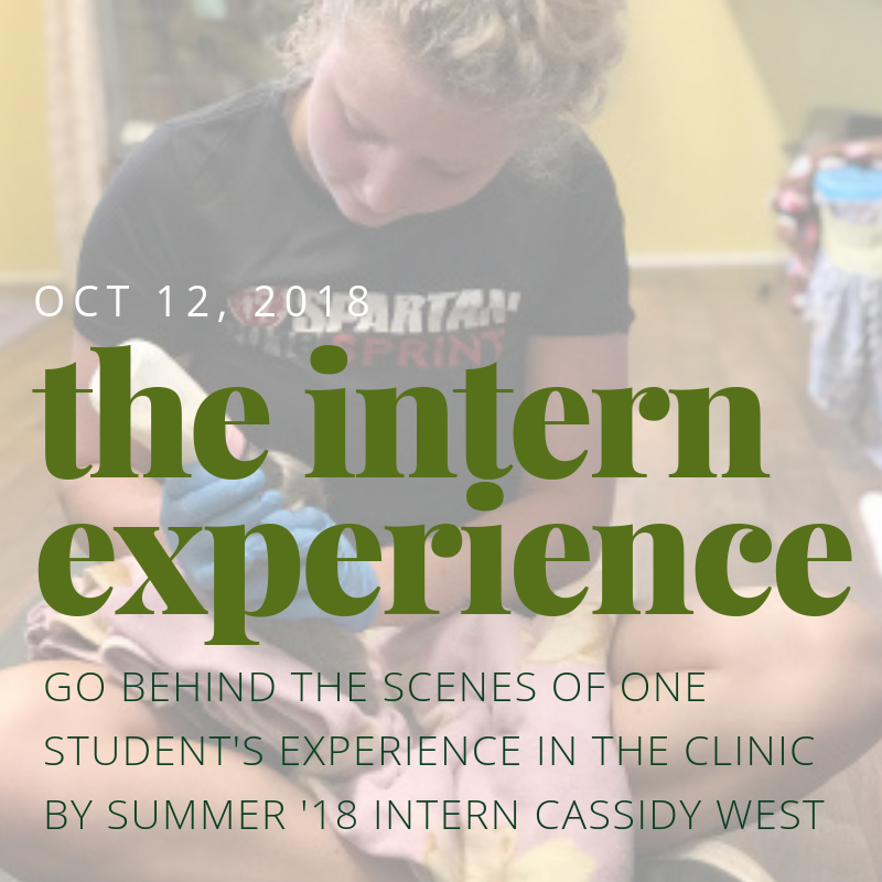 The Intern Experience - Go behind the scenes of one student's experience in the clinic. By Summer '18 intern Cassidy West