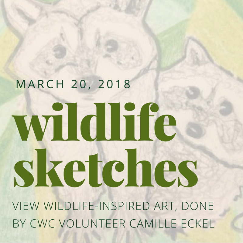 wildlife sketches by Camille Eckel