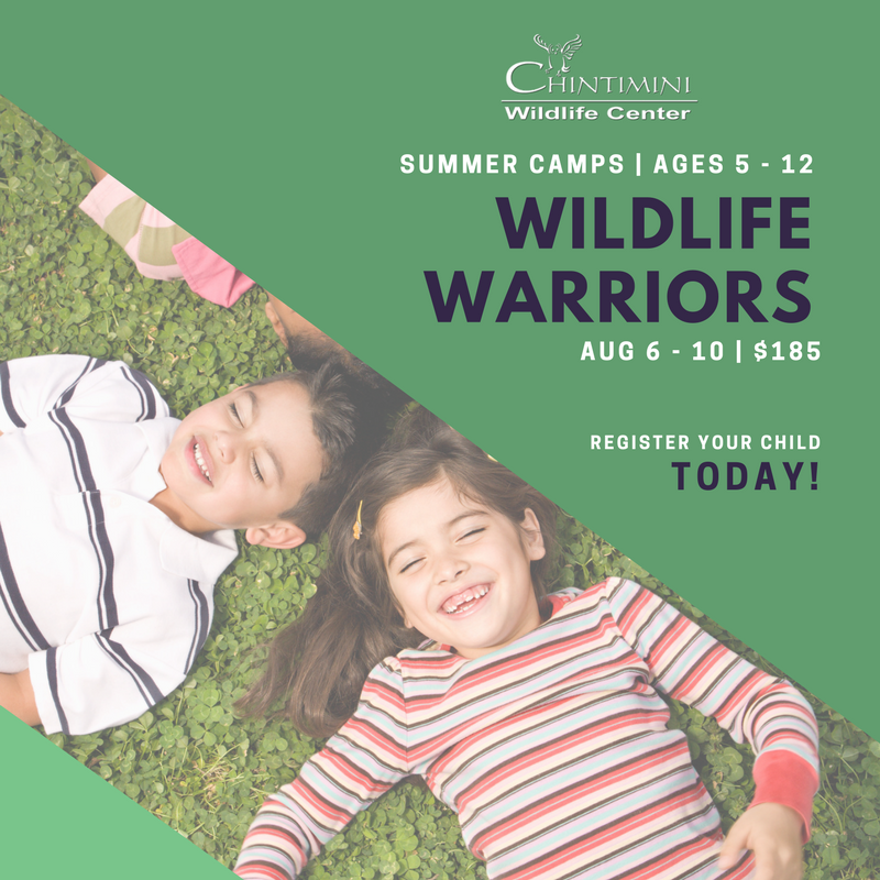 Wildlife Warriors, August 6-10, $185